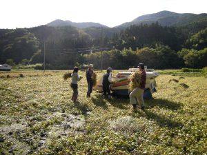 有機無農薬栽培田の収穫作業